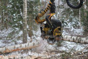 Metsaraied / metsakasvatuslikud raied